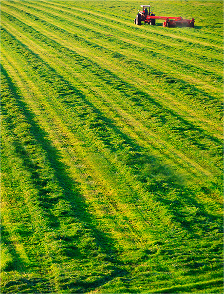 green-fields